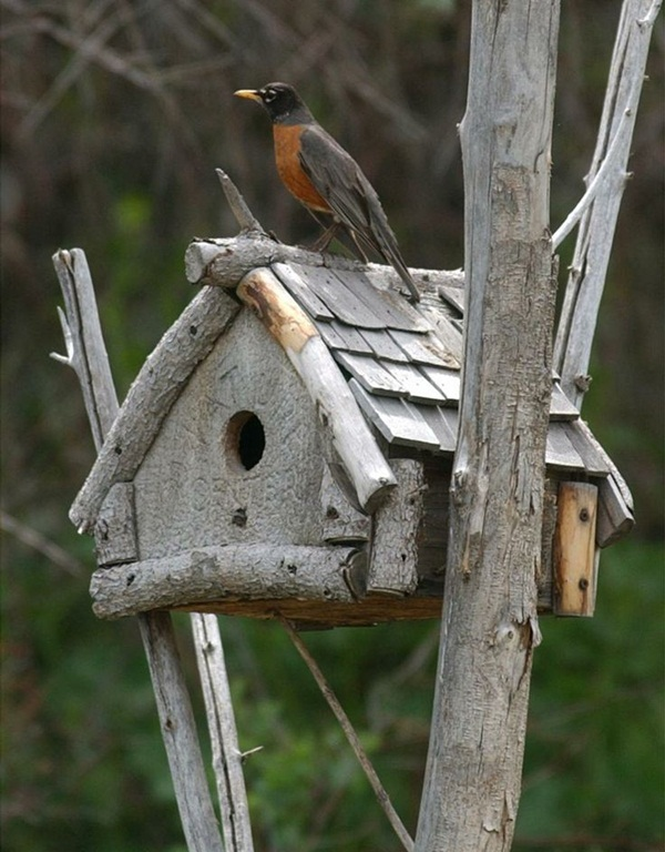 Birdhouse Design Ideas 15 decorative and handmade wooden bird houses 9 Beautiful Birdhouse Design And Ideas 5