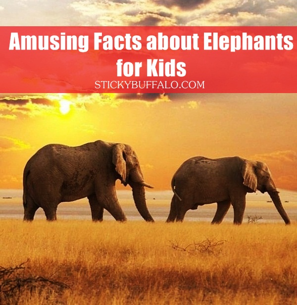 Facts about Elephants for Kids1.1