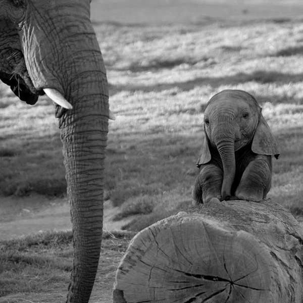 Facts about Elephants for Kids24