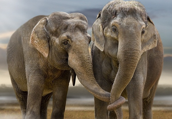 Facts about Elephants for Kids25