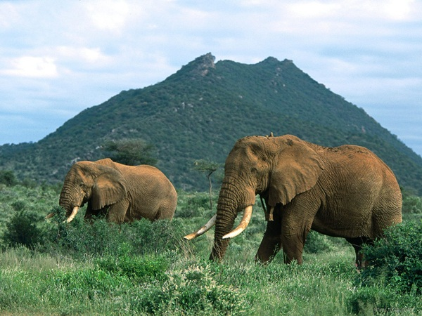 Facts about Elephants for Kids4