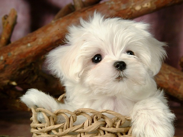 Popular and Meaningful Male Puppy Names1