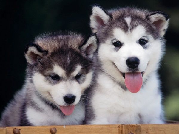 Popular and Meaningful Male Puppy Names11