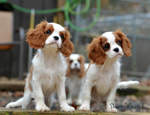 Popular and Meaningful Male Puppy Names12