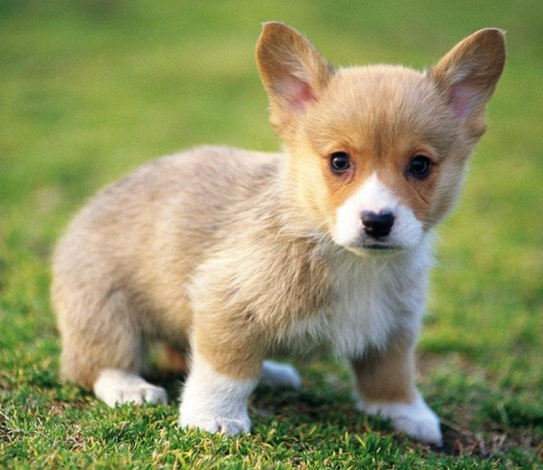 Popular and Meaningful Male Puppy Names13