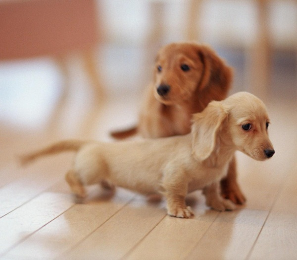 Popular and Meaningful Male Puppy Names15