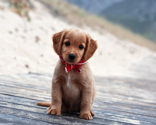 Popular and Meaningful Male Puppy Names3