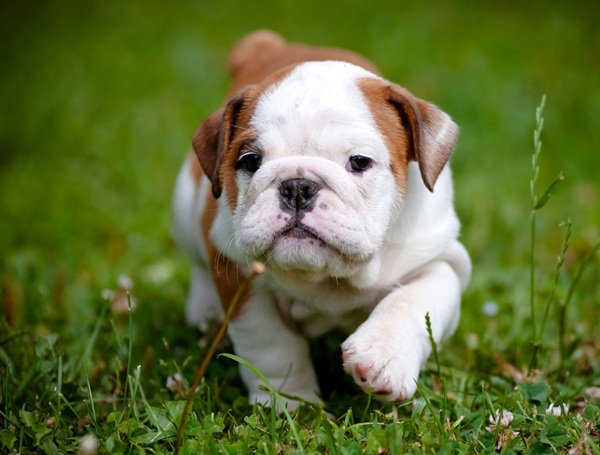 Popular and Meaningful Male Puppy Names4