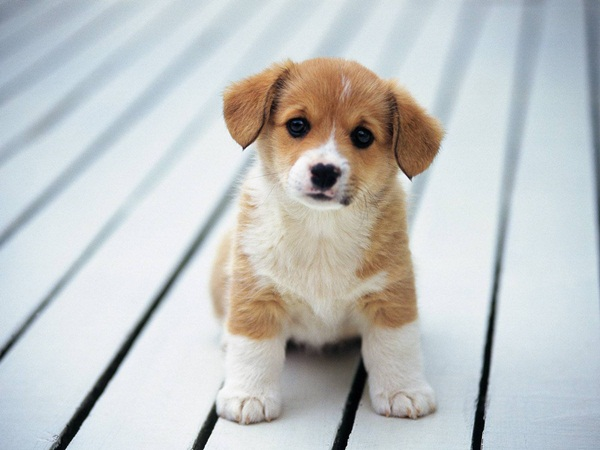Popular and Meaningful Male Puppy Names5