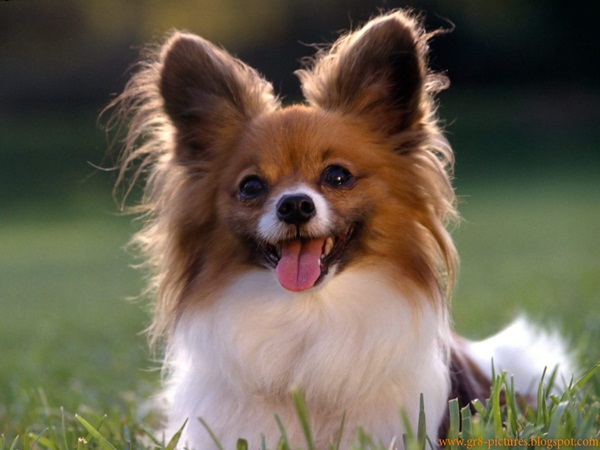 Popular and Meaningful Male Puppy Names7