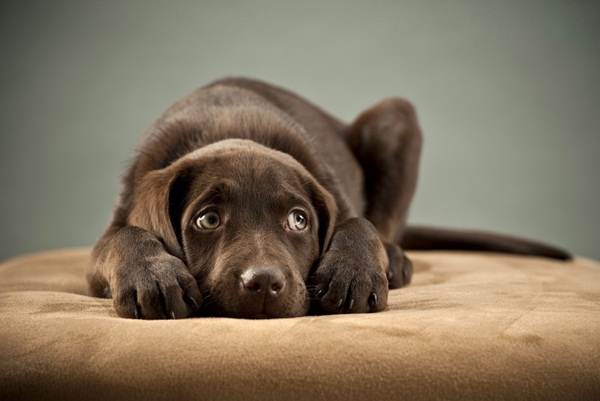 Popular and Meaningful Male Puppy Names8