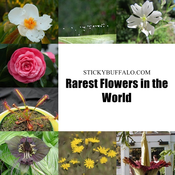 Rarest flowers in the world