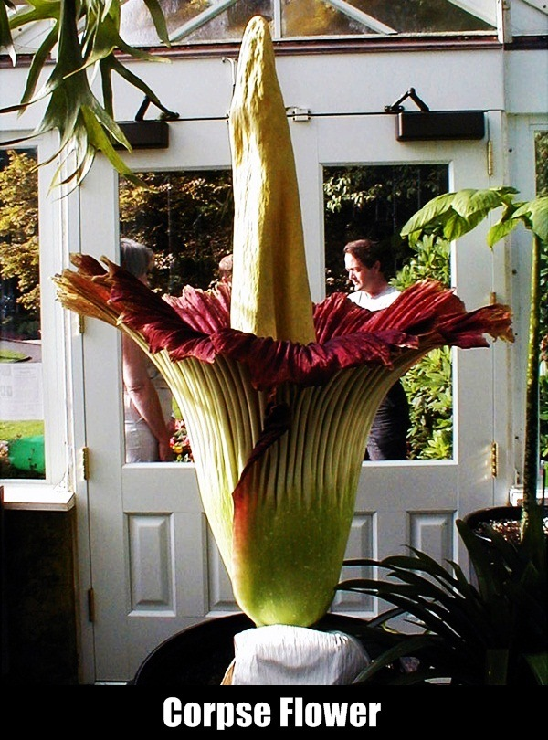 Rarest Flowers in the World10