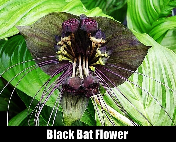 Rarest Flowers in the World15